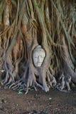 Alter Buddha bedeckt mit Baumwurzel Stockfotografie