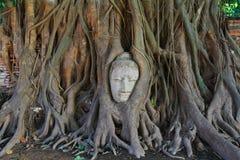 Alter Buddha bedeckt mit Baumwurzel Lizenzfreies Stockfoto