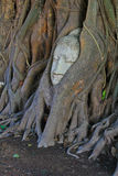 Alter Buddha bedeckt mit Baumwurzel Lizenzfreies Stockbild