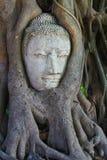 Alter Buddha bedeckt mit Baumwurzel Lizenzfreie Stockfotografie