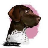 Alter dänischer Zeigerhund mit Stellen auf kurzem Pelz lokalisierte digitale Kunst Haustier entstanden vom Dänemark-Skandinavierw stock abbildung