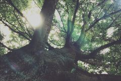 Alter düsterer Baum Stockfotos