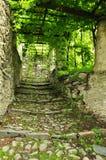 Alter Dorfstein pflasterte Durchgang unter einem Weinberg stockbild