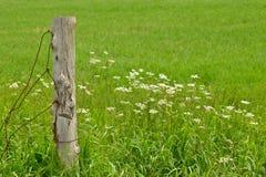 Alter Draht-Zaun Stockbilder