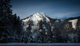 Alter dunkler Wald, der auf hohen österreichischen Alpen wächst lizenzfreies stockbild