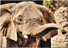 alter Elefant Lizenzfreies Stockfoto