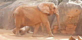 Alter Elefant durch Boulders Lizenzfreie Stockbilder
