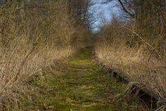 Alter Frühlingswald der Eisenbahn Stockfotografie