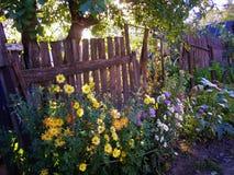 Alter Garten auf dem Morgenblitz Lizenzfreie Stockbilder