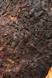 Alter gebrannter Stumpf Stockbild