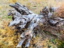Alter gefallener Baum Lizenzfreie Stockfotografie