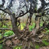 Alter gefallener Baum Stockbilder