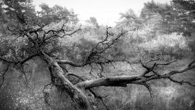 Alter gefallener Baum Stockbild