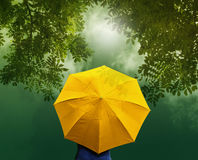 Alter gelber Regenschirm im Wald bei Sonnenaufgang, vibrierendes Konzept Stockfotografie