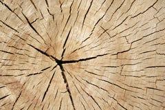 Alter gesägter Baum Stockbild