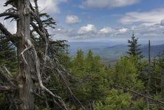 Alter getragener Baum und Adirondack Mountain View Lizenzfreies Stockbild