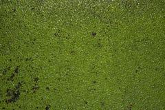 Alter grüner Lack Stockfoto