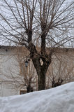 Alter großer Baum Lizenzfreie Stockfotos