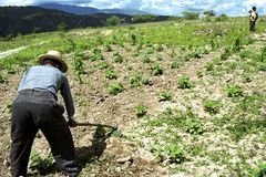 Alter guatemaltekischer indischer Mann bearbeitet sein Land mit Hacke Lizenzfreie Stockfotos