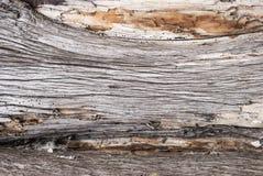 Alter hölzerner Baum-Beschaffenheits-Hintergrund Lizenzfreies Stockbild