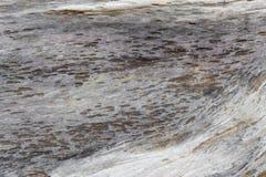 Alter hölzerner Baumstumpf der natürlichen Beschaffenheit Stockfoto