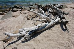 Alter hölzerner Baumstumpf im Seesalz auf Sand Meerblick von Asow-Meer Niemand auf dem Strand Belle côte lizenzfreie stockfotos