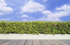 Alter hölzerner Decking und Anlage mit dem Wandgarten dekorativ auf blauem Himmel lizenzfreies stockbild