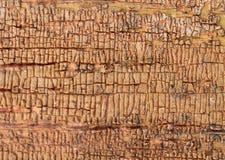 Alter hölzerner Hintergrund mit Überresten von Stücken Schrotten der alten Farbe auf Holz Beschaffenheit eines alten Baums, Brett Stockbild
