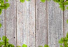 Alter hölzerner Hintergrund mit grünem Baumrahmen Stockfoto