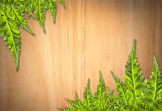 Alter hölzerner Hintergrund mit grünem Blatt Stockbild