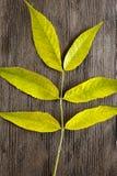Alter hölzerner Hintergrund mit grünem Blumen Lizenzfreie Stockbilder