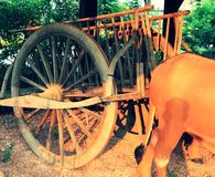 Alter hölzerner Ochsenwagen mit Statue von Kühen in der Position, als ob, das Anzeigen bearbeitend am kulturellen Park stockbilder