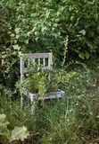 Alter hölzerner Stuhl im wilden Garten Stockbilder
