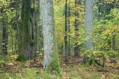 Alter herbstlicher Wald Lizenzfreie Stockfotos