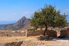 Alter Hof mit Granatapfelbäumen Lizenzfreies Stockfoto