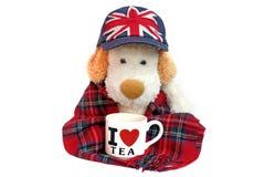 Alter Hund ähnlich Engländer mit Teetasse Lizenzfreie Stockfotos