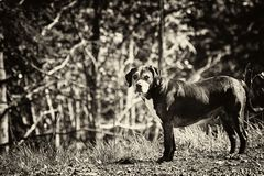 Alter Hund Lizenzfreie Stockfotografie