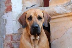 Alter Hund Stockfoto