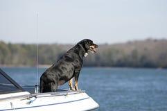 Alter Hund auf einem Boot Stockfoto