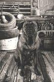 Alter Hund in der antiken Kfz-Werkstatt Stockfoto