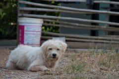 Alter Hund, der auf dem Gras sitzt stockbild