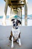 Alter Hund, der Eigentümer auf Ozeanstrandurlaub spielen wünscht Lizenzfreies Stockfoto