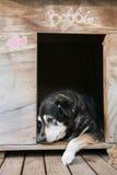 Alter Hund in der Hundehütte Lizenzfreies Stockbild