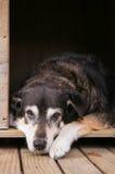 Alter Hund in der Hundehütte Lizenzfreie Stockfotos