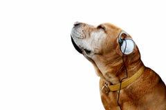 Alter Hund der Musik Lizenzfreies Stockfoto