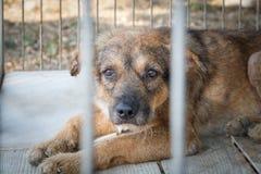 Alter Hund des Mitleids lizenzfreies stockfoto