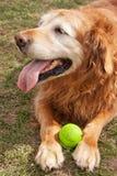Alter Hund und seine Kugel lizenzfreie stockfotografie