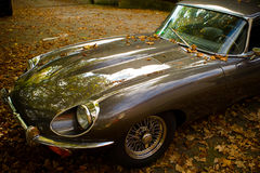 Alter Jaguar und Herbstblätter Stockfotos