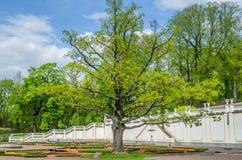 Alter Kadriorg-Park Zeit der Eiche im Frühjahr, Tallinn, Estland Stockfotografie