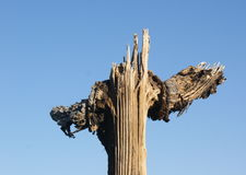 Alter Kaktus Stockbilder